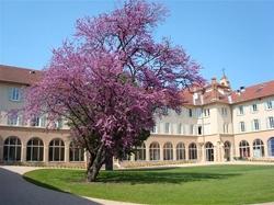 Domaine St Joseph : lieu de la formation en médecine chinoise à Lyon